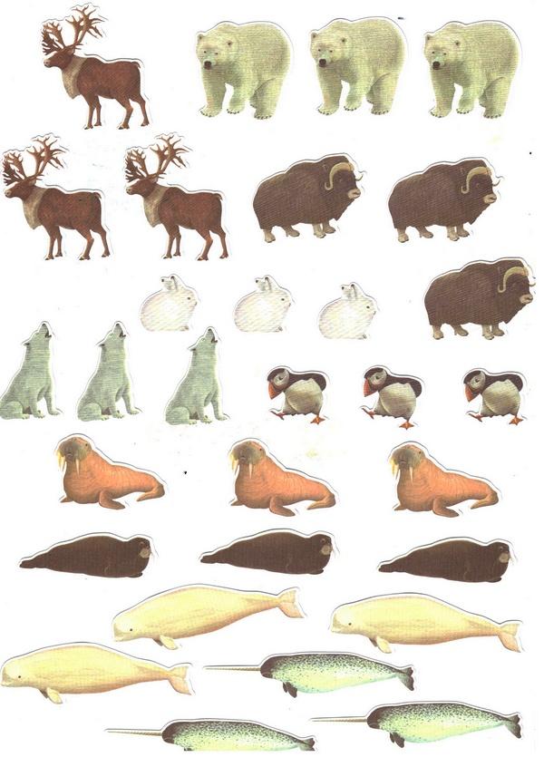 30 animaux de l arctique gommettes enfants gommettes animaux magommette - Animaux pole nord ...