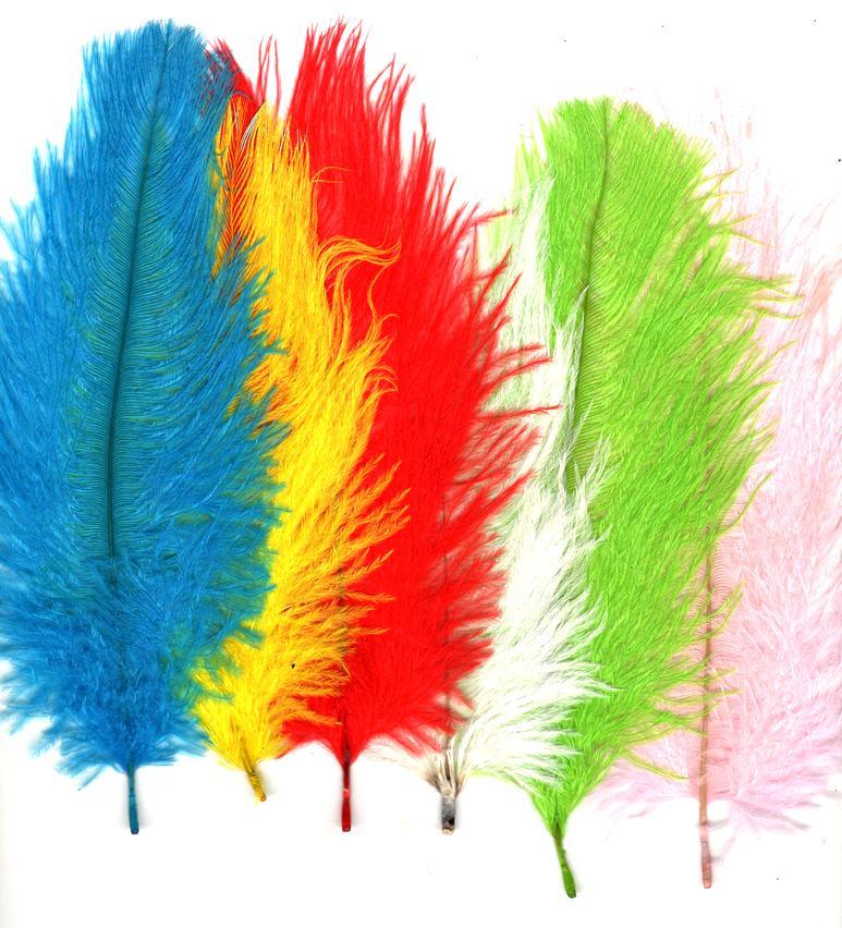 Plumes autruche couleurs en variations