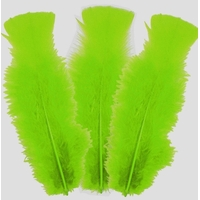 10 plumes 5 à 10cm verte