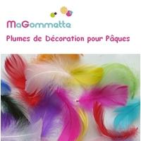 plumes decoration couleur