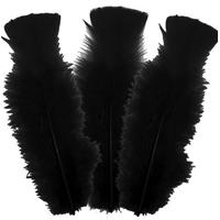 10 plumes d'oies 5 à 10cm, Noires