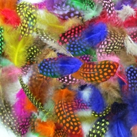10 plumes couleurs variées 3 à 6 cm