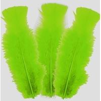 10 plumes Vert Clair 5 cm à 10 cm
