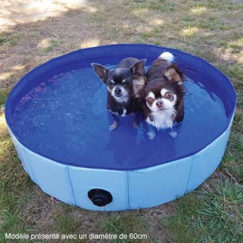 piscine-pour-chien (2)