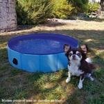 piscine-pour-chien (1)