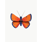 small-insects-copper-butterfly-1