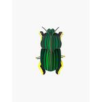 scrab-beetle-big