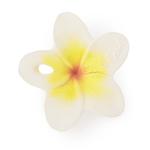 Hawaii-the-Flower-dentition-fleur-petit-Homme-Valenciennes