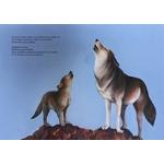 ECL Au pays des loups qui chantent extrait 4
