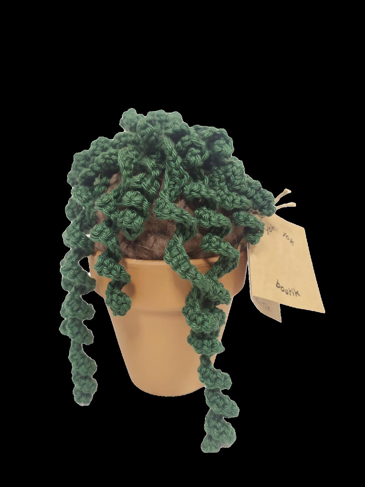 Cactus tombant en laine
