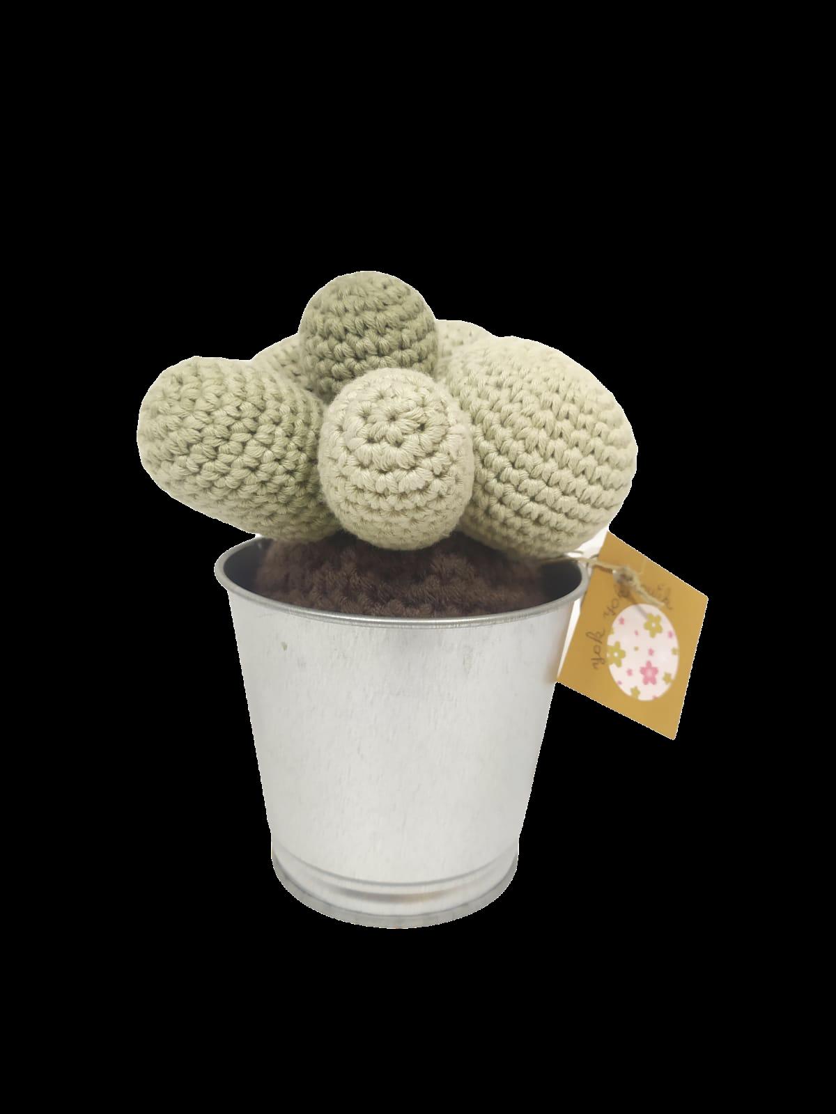 Cactus boules en laine