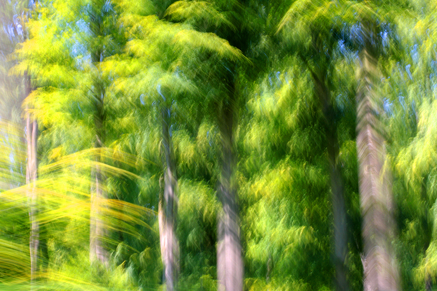 2 Forêt d\'Eu II