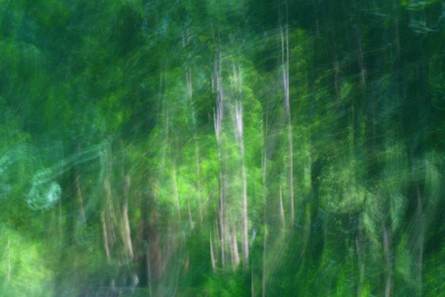 Forêt D\'Eu IV