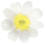assiette-petale-blanc