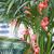 guirlande-flamant-rose-fete-tropicale