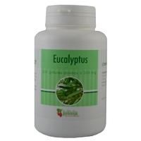 Eucalyptus 200 gélules 250 mg