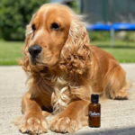 shampoing_naturel_pour_chien_noala_4