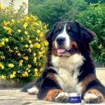 coussinet_pour_chien_protection_atlantic_noala_6