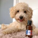 shampoing_pour_chien_naturel_et_écologique_the_french_10