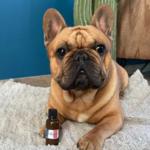 shampoing_pour_chien_naturel_et_écologique_the_french_16
