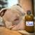 shampoing_pour_chien_naturel_antidemangeaison_zen_noala.3