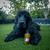 shampoing_pour_chien_naturel_et_écologique_the_french_0