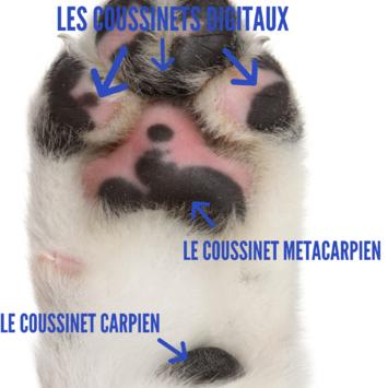 coussinet_pour_chien_noala