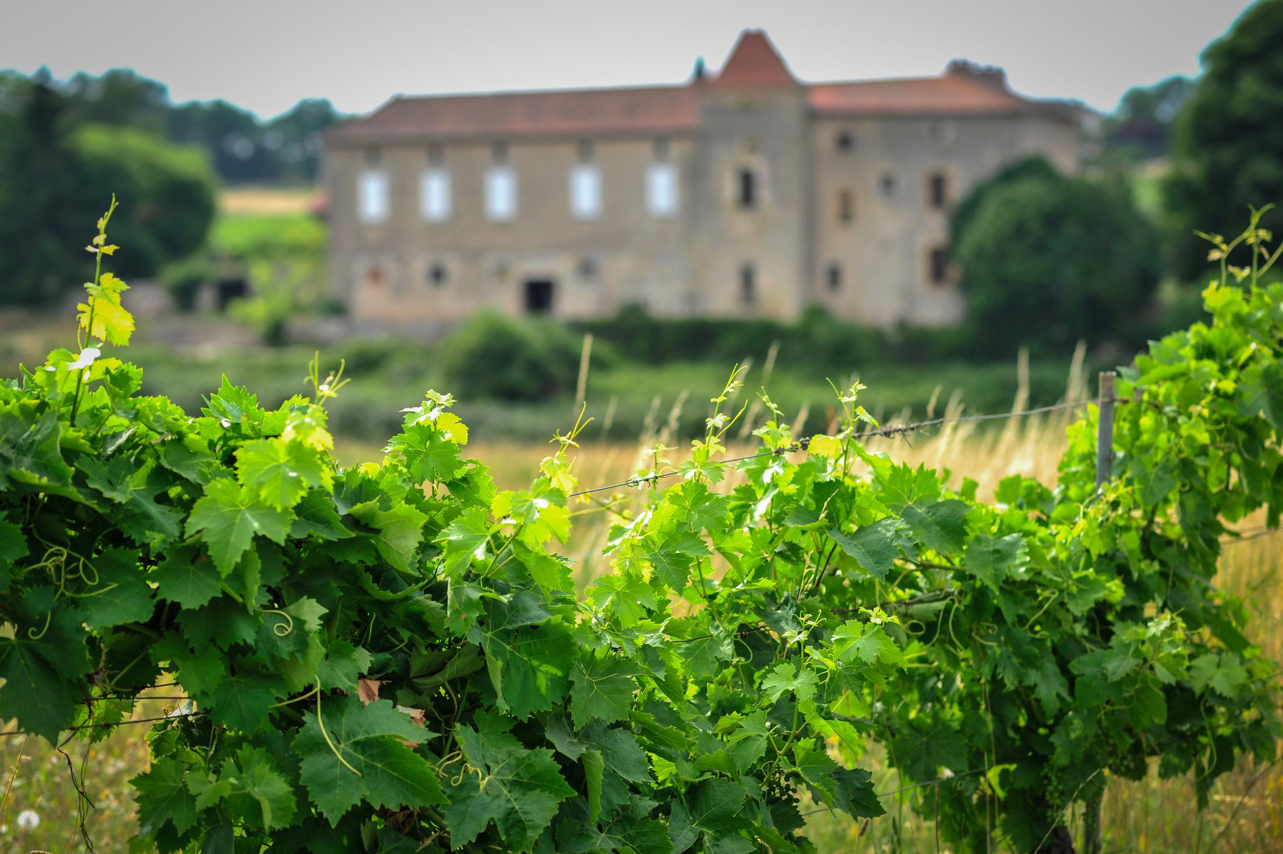 chateau lacapelle cabanac chai c lot tourisme c ory 31