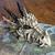 crane-dragon-1