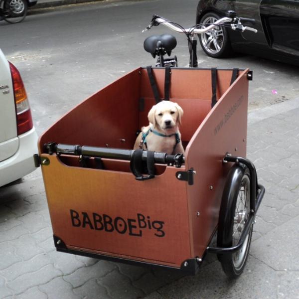 velo cargo hollandais BABBOE BIG
