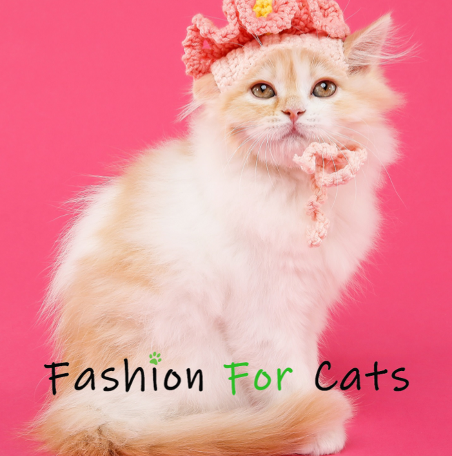 relations presse media journalistes rp fashion for cats france 1