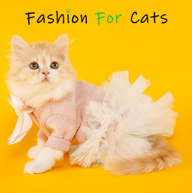 relations presse media journalistes rp fashion for cats france 2