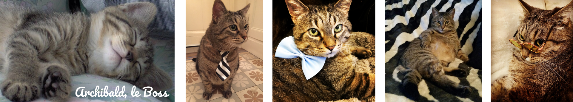archibald boss mode pour chats fashion for cats