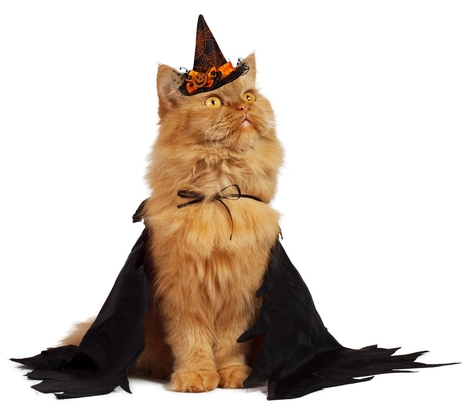 halloween-pour-chats