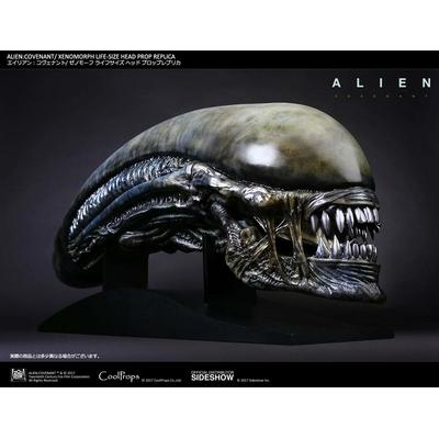 Réplique Alien Covenant tête Xenomorph 90cm