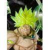 Figurine Dragon Ball Z Broly Super Saiyan S.H. Figuarts Zero Burning Battle 32cm 1001 Figurines 2