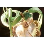 Statuette Character Vocal Series 01 Hatsune Miku Symphony 5th Anniversary Ver. 25cm 1001 Figurines (3)