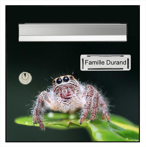 Sticker pour boîte aux lettres, l\'araignée mignone