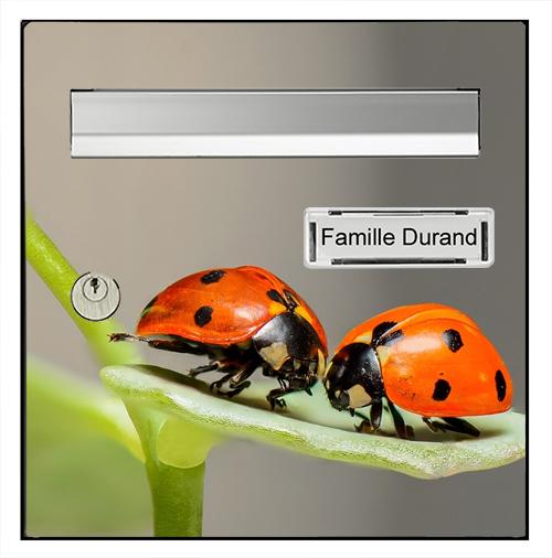 Sticker pour boîte aux lettres, Coccinelles
