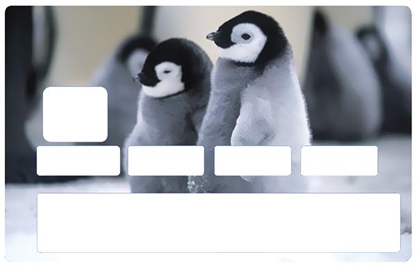 Sticker pour carte bancaire, Bébé pingouins