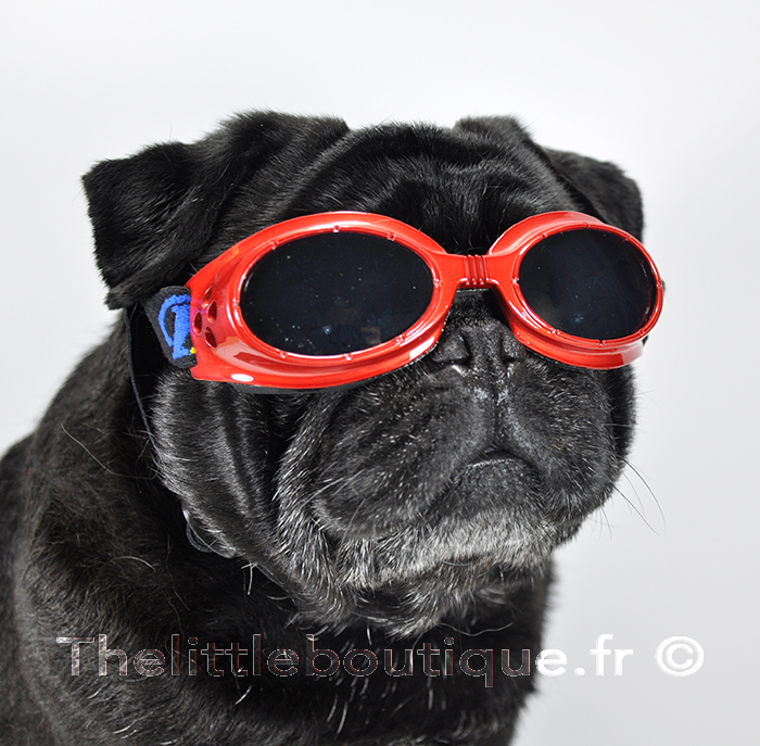 lunette-pour-chien-mr-go-rouge-the-little-boutique