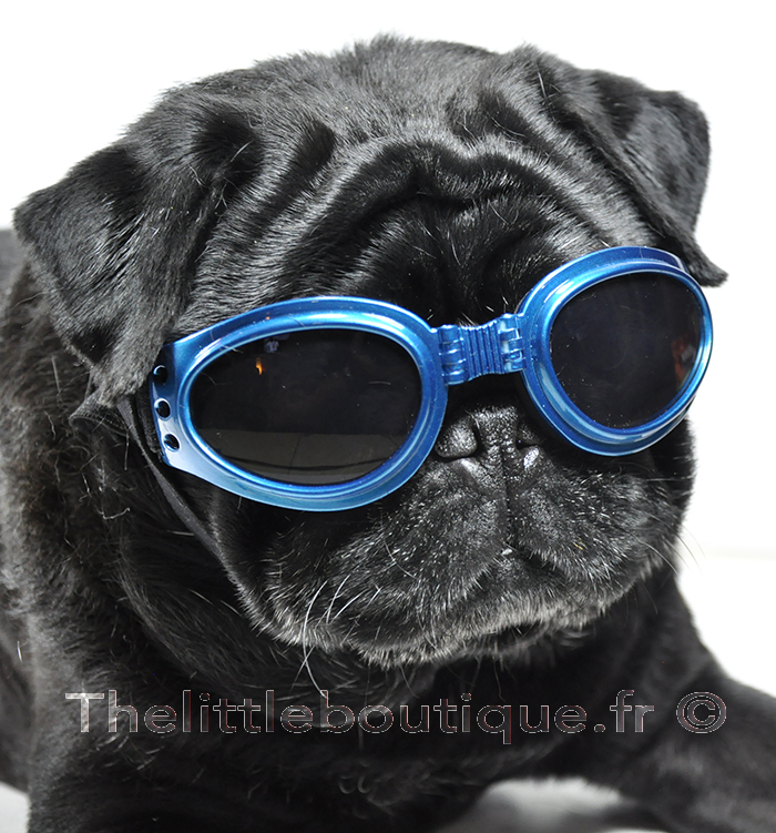 lunette-pour-chien-mr-go-the-little-boutique
