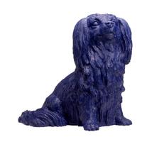 le chien FOLICHON , Night Blue