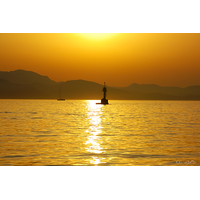 Cardinale au coucher du soleil, Impression photo HD sur plexiglas, Dim. : 70 cm x 50 cm