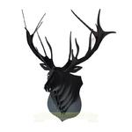 animatomy-cerf-marius-NOIR-the-little-boutique-1