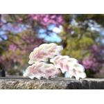 fondant épi parfumé fleur de cerisier
