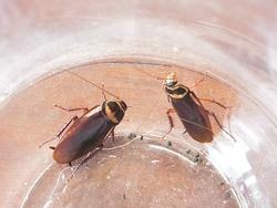 la prolif ration des cafards et blattes ou cancrelats insecticide spray contre les insectes. Black Bedroom Furniture Sets. Home Design Ideas