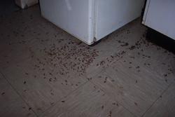 insecticide contre les blattes