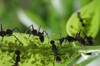 repousser les pucerons de la maison insecticide contre les insectes. Black Bedroom Furniture Sets. Home Design Ideas