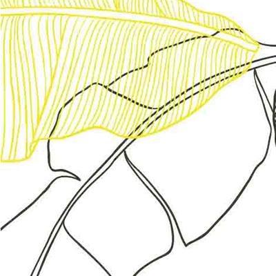 Le-de-papier-peint-jungle